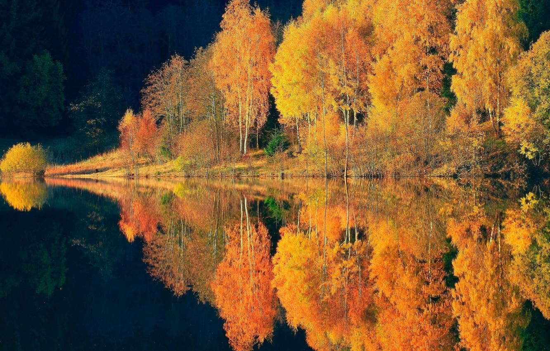 Фото обои осень, лес, отражения, деревья, природа, река, краски