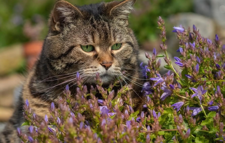 Фото обои кот, цветы, мордашка, котэ, котофеич