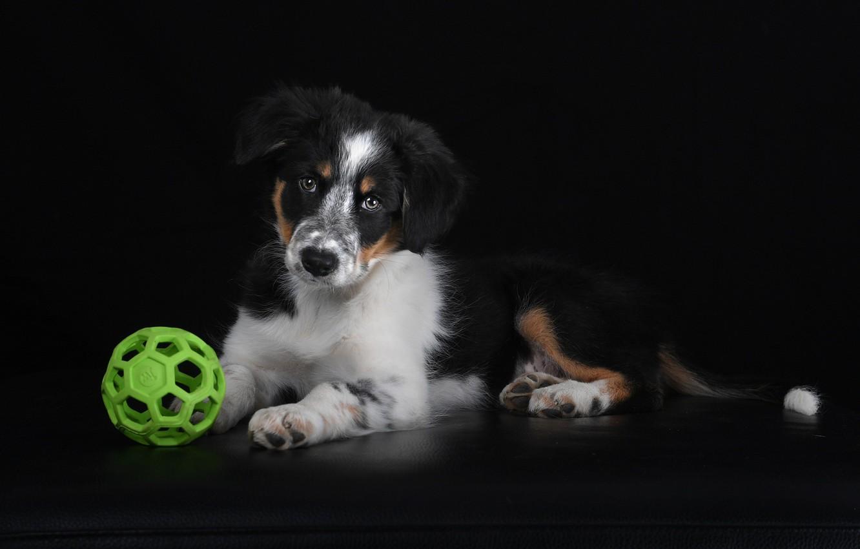 Фото обои мяч, собака, щенок