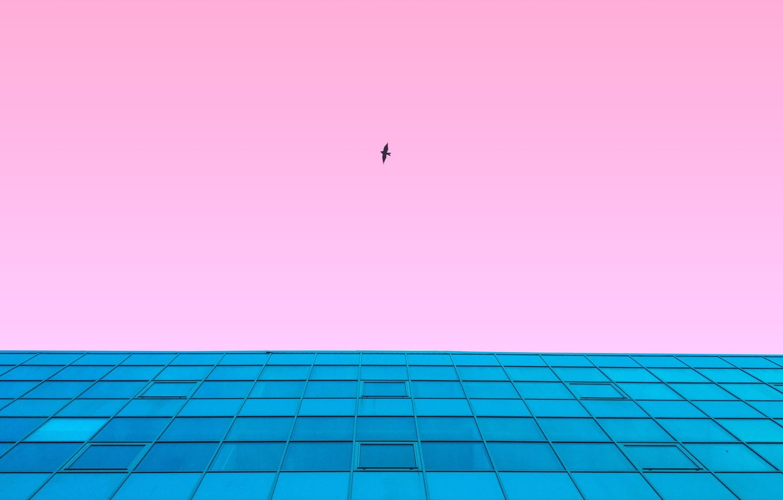 Фото обои небо, полет, стиль, фон, розовый, птица, здание, вид