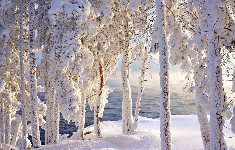 Фото обои иней, снег, мороз, сибирь