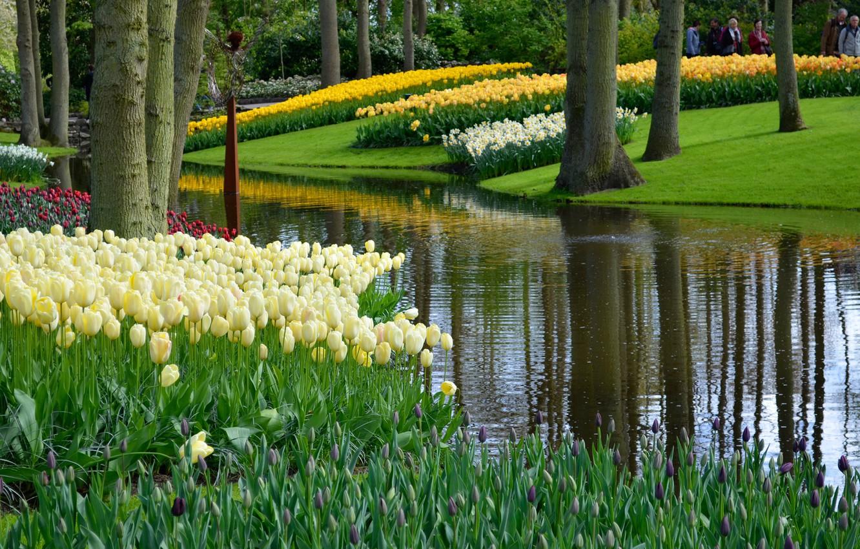 Фото обои зелень, трава, деревья, цветы, пруд, парк, тюльпаны, Нидерланды, Keukenhof