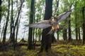 Картинка лес, природа, птица, Wild New Zealand Falcon