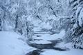 Картинка лес, река, зима, снег, полынья, стремнина