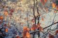 Картинка туман, осень, листья