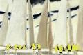 Картинка парус, яхта, Регата, картина, Andre Brasilier