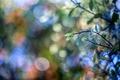 Картинка листья, ветка, боке