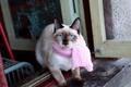 Картинка шарфик, шарф, мордашка, розовый, голубоглазая, я знал одну кошечку она всегда выходила в окно, голубые ...