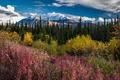Картинка травы, горы, небо, разноцветный, деревья