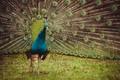 Картинка bird, green, animal