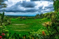 Картинка джунгли, тропики, облака, зелень, Bali, Индонезия, домики, плантации, пальмы