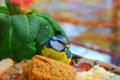 Картинка Птичка, Зелёные листья, Green leaves, Bird
