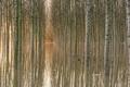 Картинка отражение, вода, деревья, Ноябрь