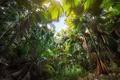 Картинка джунгли, деревья, пальмы