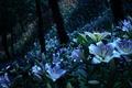 Картинка лес, очаровательно, сумерки, ночь, стволы, белые, деревья, лунная ночь, сад, лилии, склон, свет, много, цветы