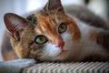 Картинка глаза, взгляд, кошка