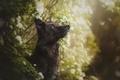 Картинка собака, цветение, боке, Elina