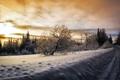 Картинка зима, дорога, небо, снег, деревья, птицы