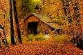 Картинка Fall, Арт, Art, Рисунок, Осень, Autumn