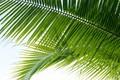 Картинка листья, palm, nature, пальма, leaves, природа
