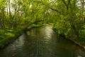 Картинка лес, река, деревья