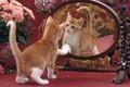 Картинка цветы, зеркало, отражение, котенок