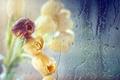 Картинка стекло, цветы, тюльпаны