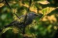 Картинка боке, ветка, зелень, птица, листья