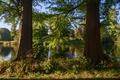 Картинка зелень, лес, лето, трава, солнце, деревья, ветки, река, Нидерланды, De Haar Castle Park