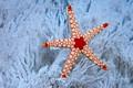 Картинка море, природа, океан, кораллы, морская звезда, Сейшельские острова