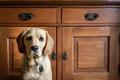Картинка дом, взгляд, собака