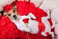 Картинка собака, лепестки, rose, красная роза, dog, funny, petals