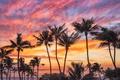 Картинка закат, пальмы, океан, Гавайи, Pacific Ocean, Hawaii, Тихий океан, Puako, Пуако