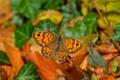 Картинка Макро, Butterfly, Бабочка, Macro