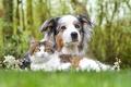 Картинка кот, друзья, собака