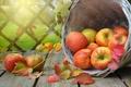 Картинка листья, ветки, корзина, яблоки, доски, плоды, фрукты, физалис