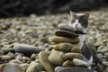 Картинка кот, камни, спрятался, желтые глаза, галька, берег, взгляд, кошка
