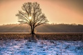 Картинка зима, свет, дерево, утро