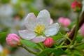 Картинка Весна, Flower, Spring, Rain drops, Цветочек, Капли дождя