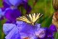 Картинка Butterfly, Цветы, Flowers, Макро, Spring, Бабочка, Весна, Macro