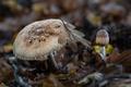 Картинка природа, грибы, лист