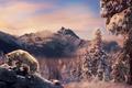 Картинка снег, горы, природа, волк, ретушь, by Amphispiza