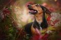 Картинка друг, природа, собака