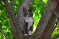 Картинка Дерево, Кошка, Tree, Cat