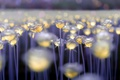 Картинка свет, цветы, фон, цвет