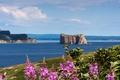 Картинка Иль-Бонавантюр-Э-дю-Роше-Персе, Канада, Национальный парк, скала, море, цветы