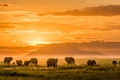 Картинка Африка, горы, свет, слоны