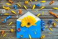 Картинка цветок, бумага, конверт