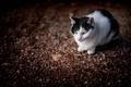 Картинка кот, боке, кошка