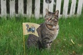 Картинка кошка, трава, кот, забор, космонавт, флаг, скафандр, cat, флажок, 8k+